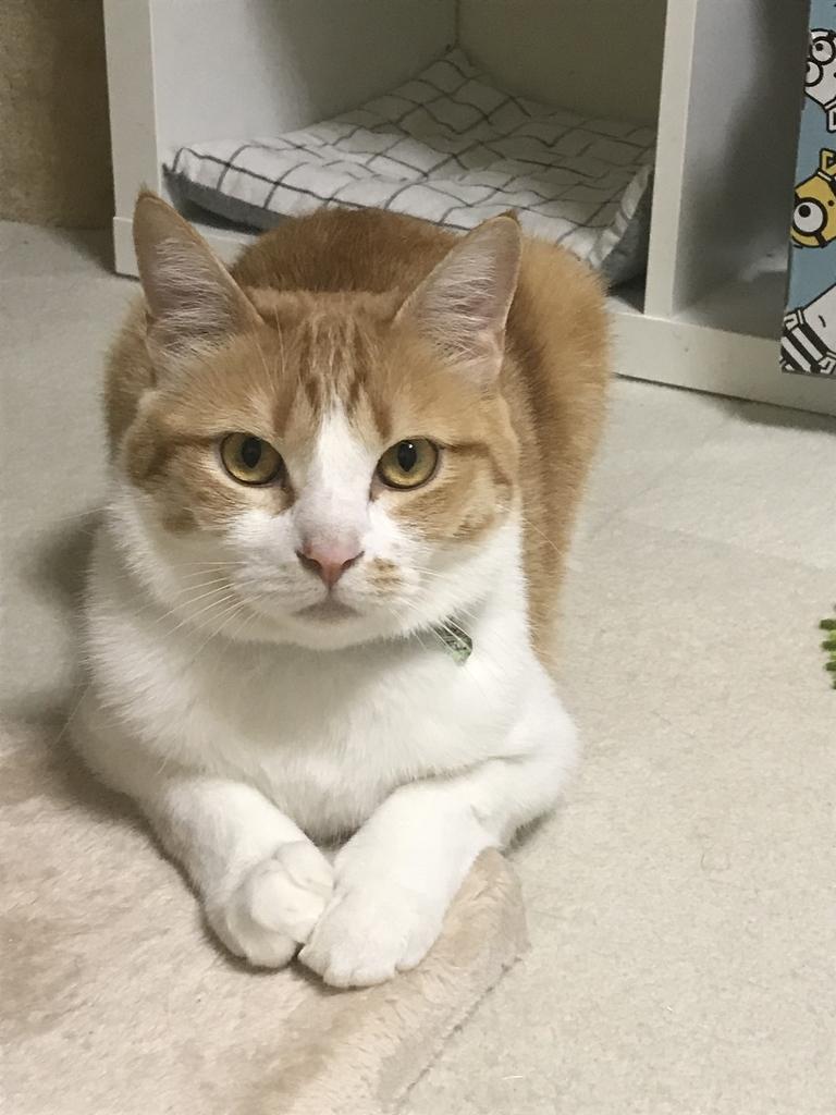 f:id:Gomez-cat:20181114110804j:plain