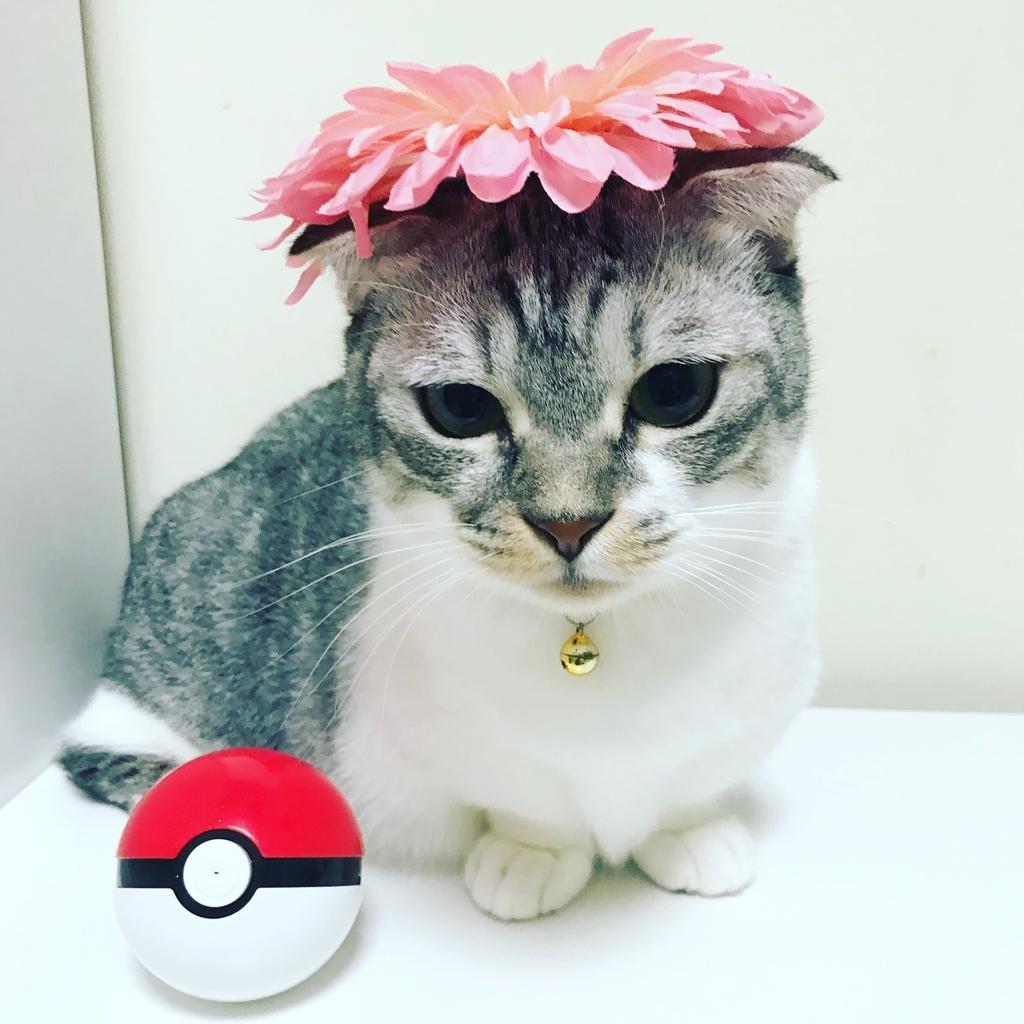 f:id:Gomez-cat:20181116182748j:plain