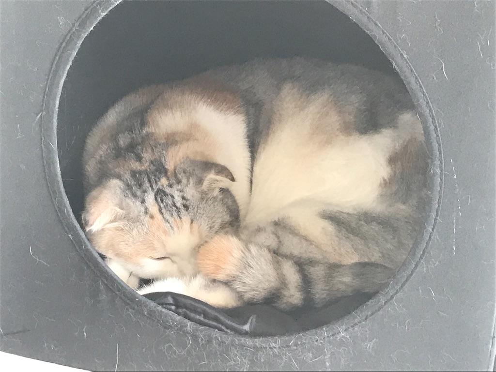 f:id:Gomez-cat:20181117131419j:image