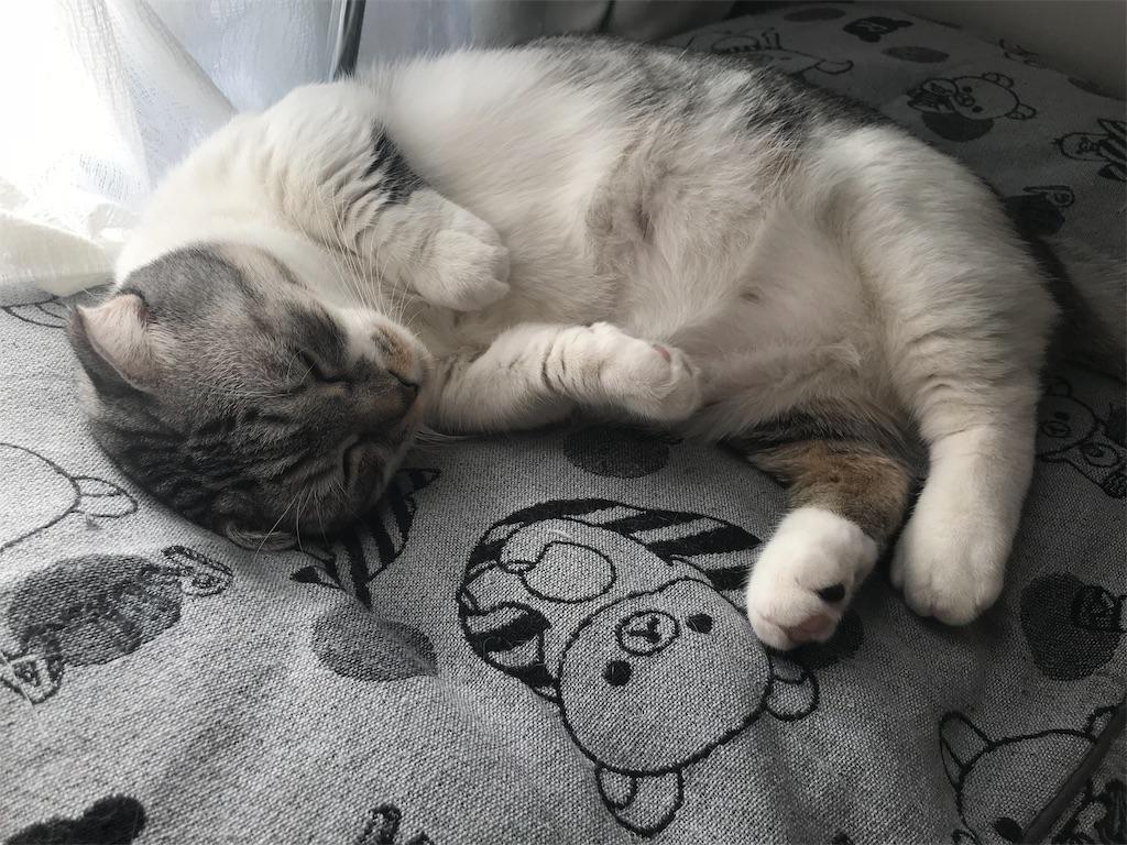f:id:Gomez-cat:20181117131510j:image