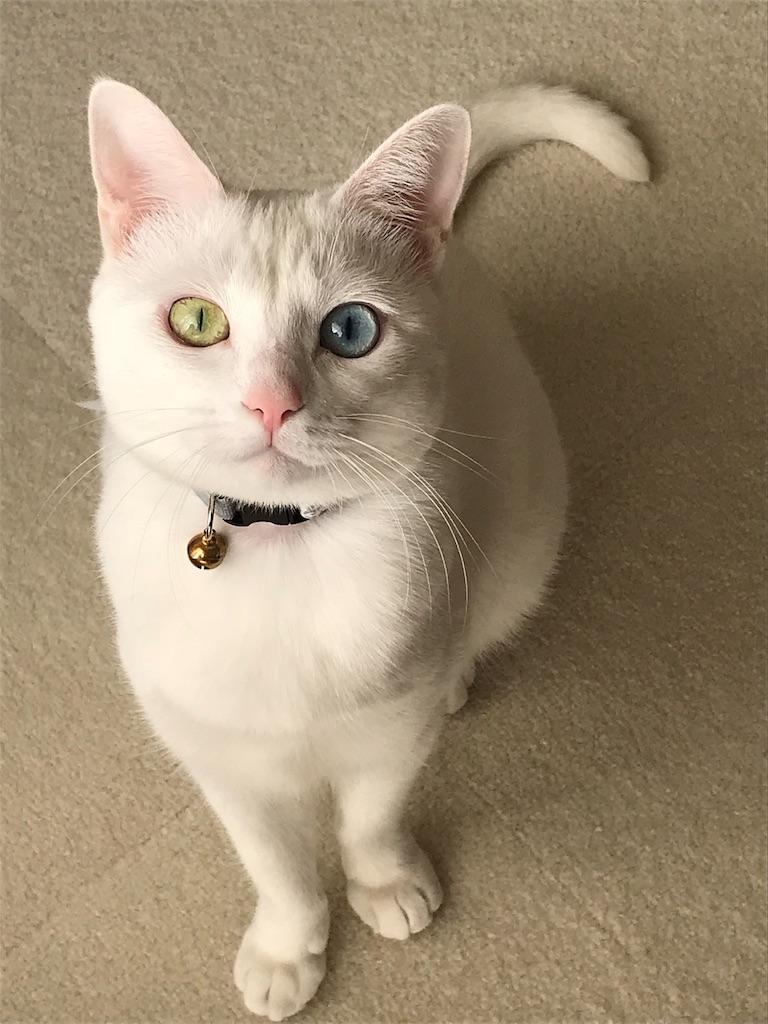 f:id:Gomez-cat:20181120013356j:image