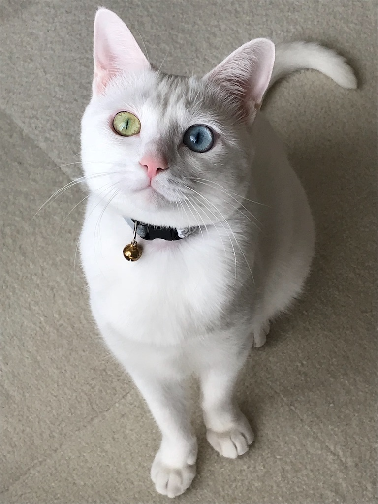 f:id:Gomez-cat:20181120013424j:image