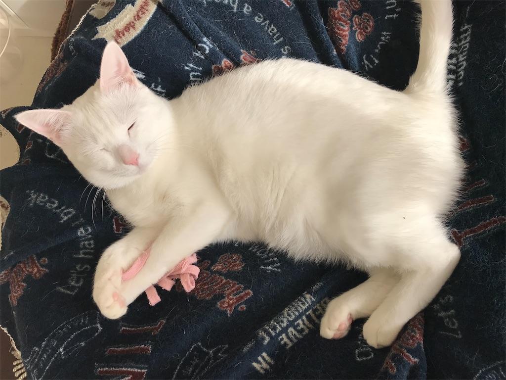 f:id:Gomez-cat:20181120013609j:image