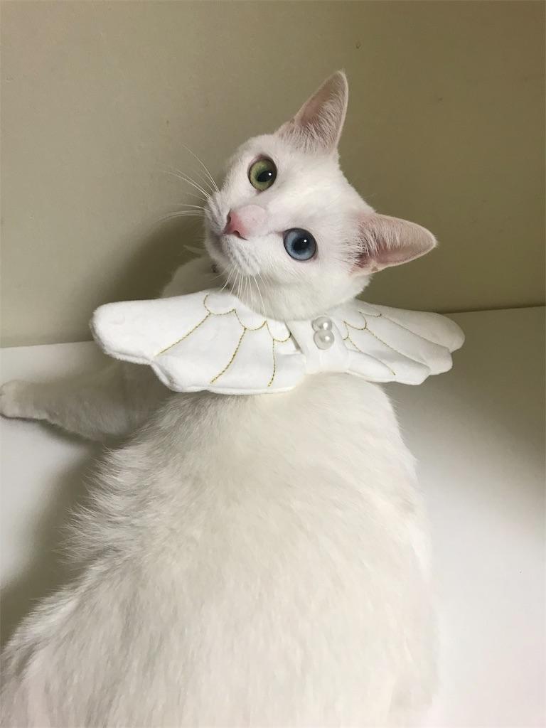 f:id:Gomez-cat:20181120014017j:image