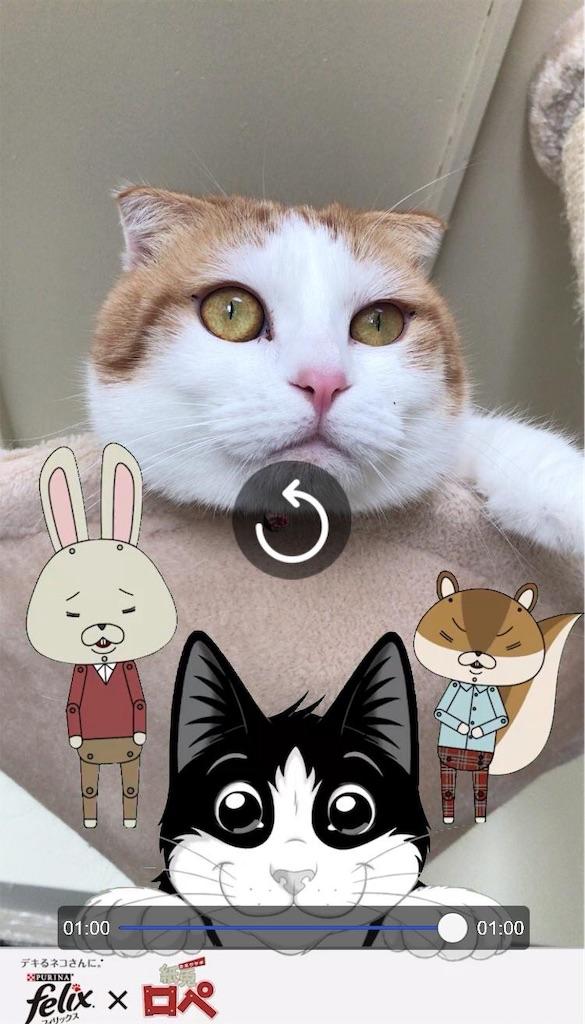 f:id:Gomez-cat:20181123133736j:image