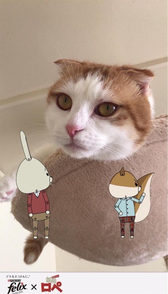 f:id:Gomez-cat:20181123141958j:image