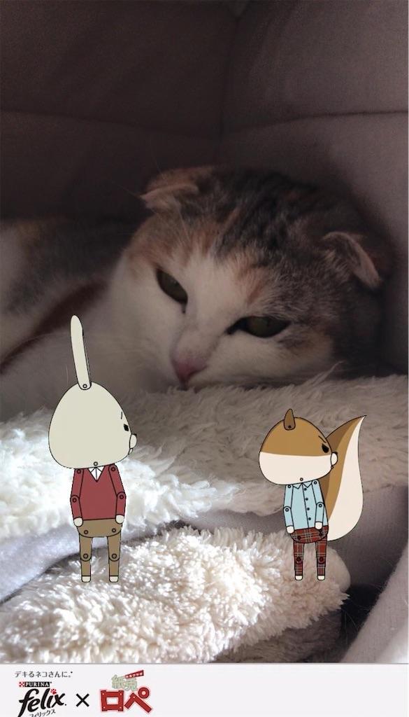 f:id:Gomez-cat:20181123142006j:image