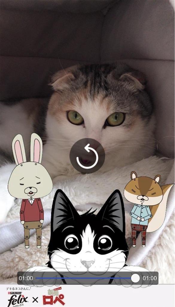 f:id:Gomez-cat:20181123142010j:image