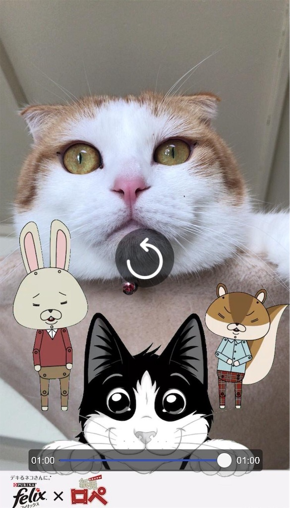 f:id:Gomez-cat:20181123142019j:image