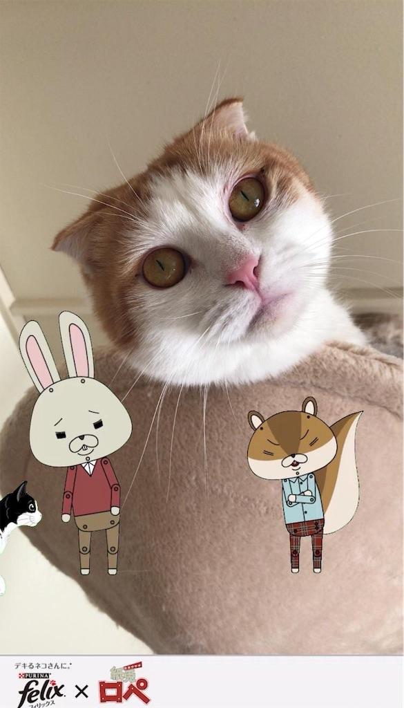 f:id:Gomez-cat:20181123145123j:image