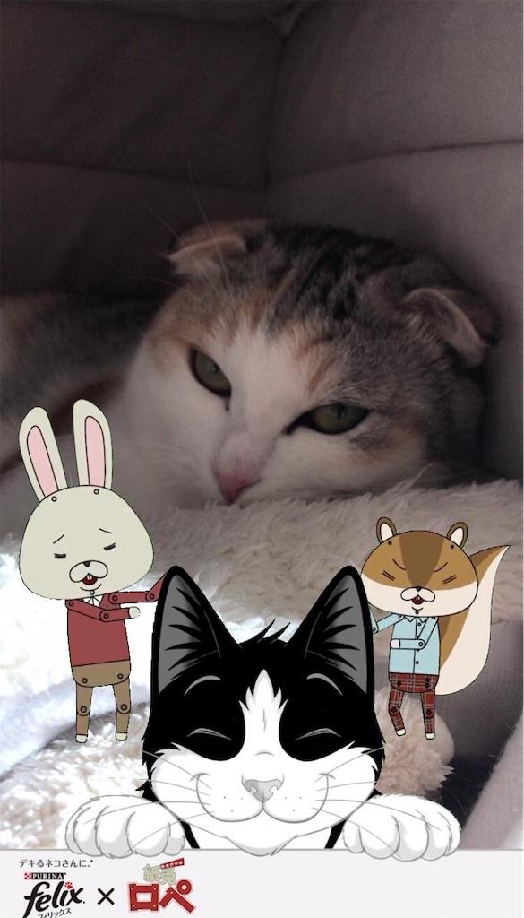 f:id:Gomez-cat:20181123145126j:image
