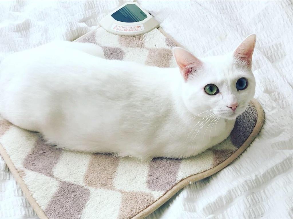 f:id:Gomez-cat:20181124213211j:image