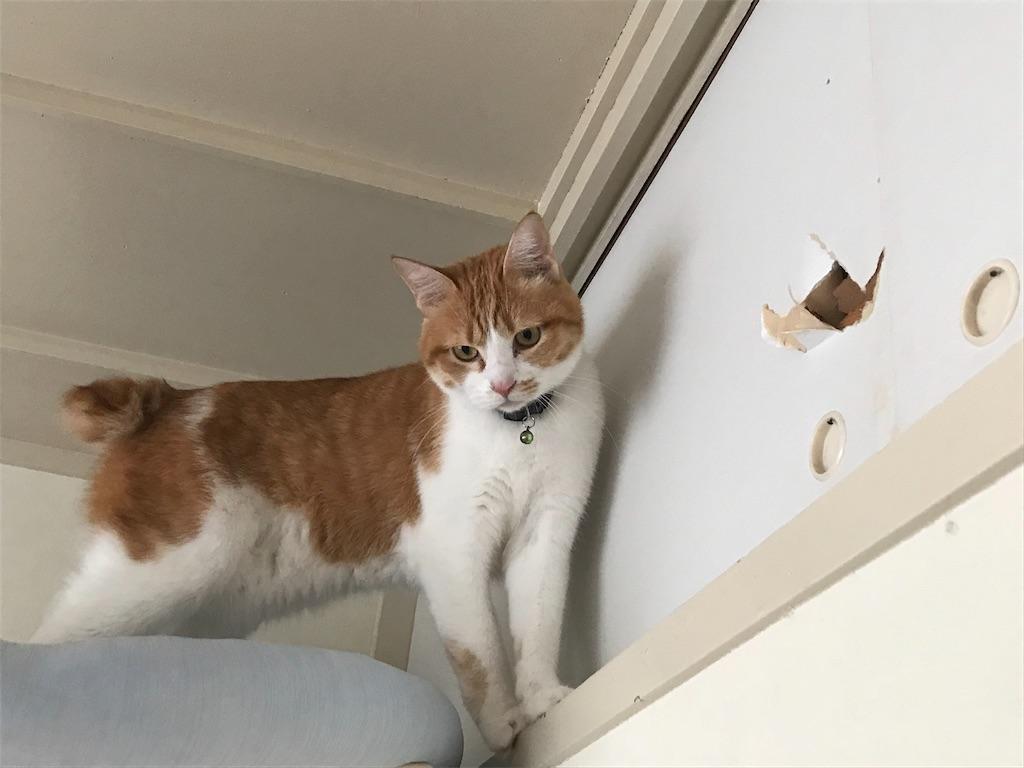 f:id:Gomez-cat:20181124213241j:image