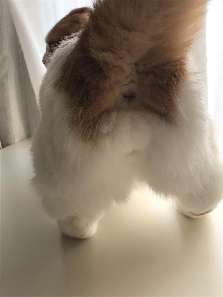 f:id:Gomez-cat:20181201110604j:image