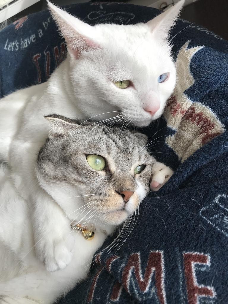 f:id:Gomez-cat:20181202002502j:plain