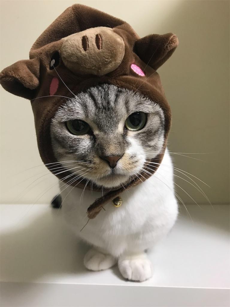 f:id:Gomez-cat:20181203180318j:image