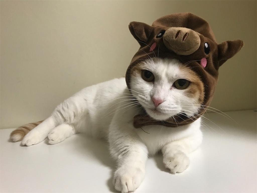f:id:Gomez-cat:20181203180326j:image
