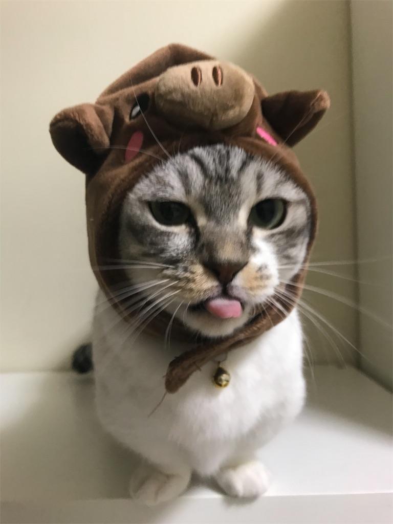 f:id:Gomez-cat:20181203183704j:image