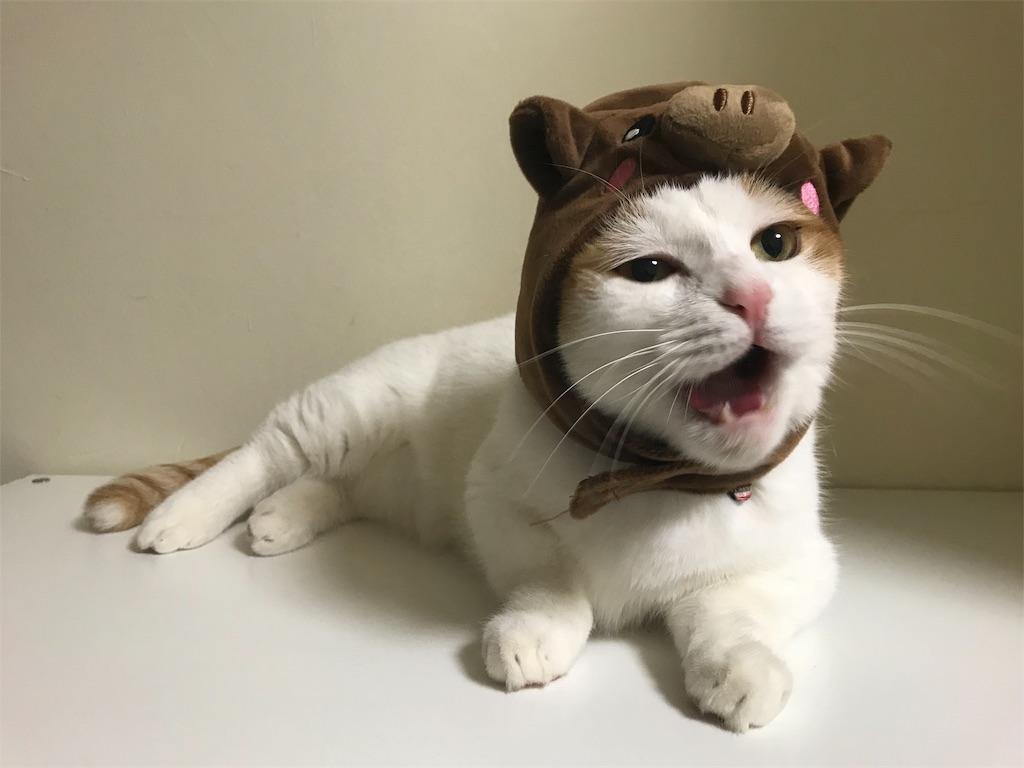 f:id:Gomez-cat:20181205015508j:image