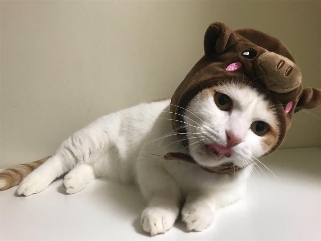 f:id:Gomez-cat:20181205015516j:image