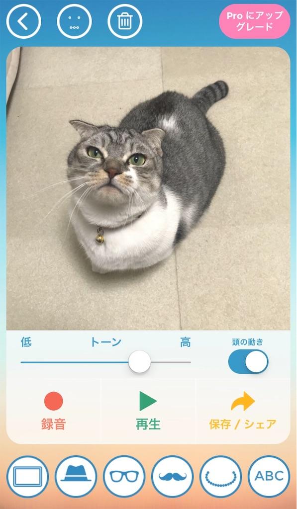 f:id:Gomez-cat:20181206220530j:image