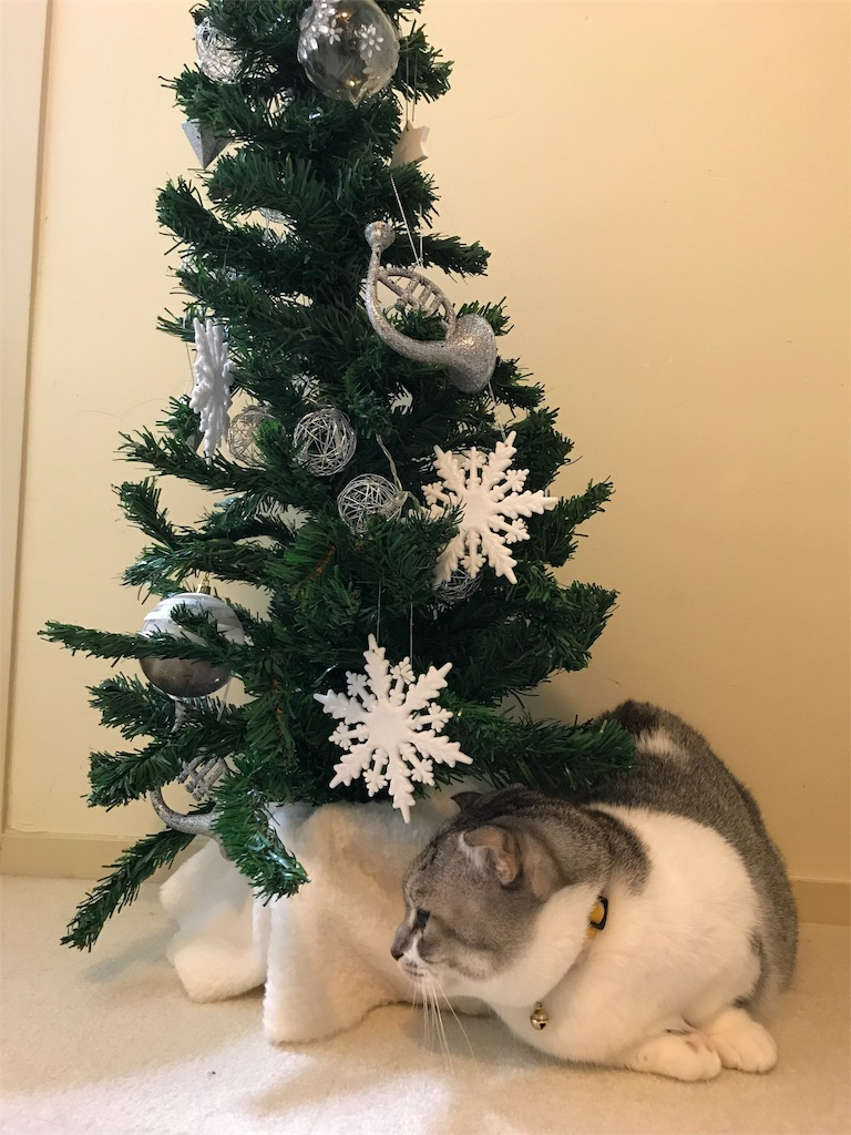 f:id:Gomez-cat:20181208010104j:image