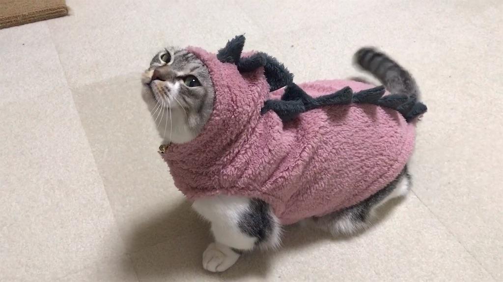 f:id:Gomez-cat:20181211204342j:image