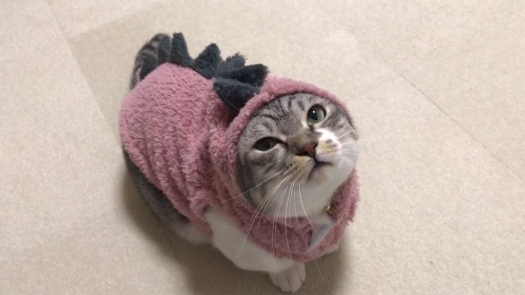 f:id:Gomez-cat:20181211204534j:image