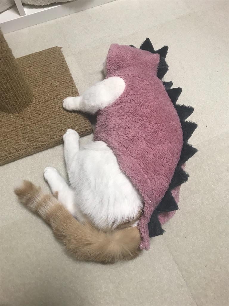 f:id:Gomez-cat:20181212002721j:image