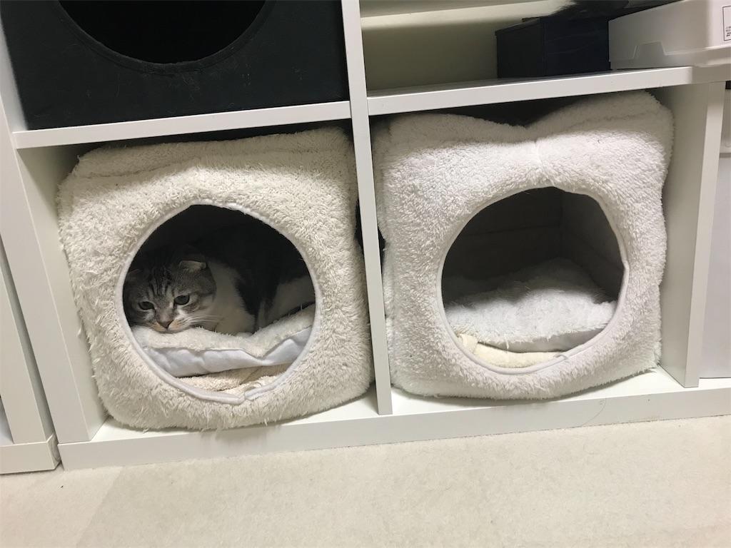 f:id:Gomez-cat:20181212105454j:image