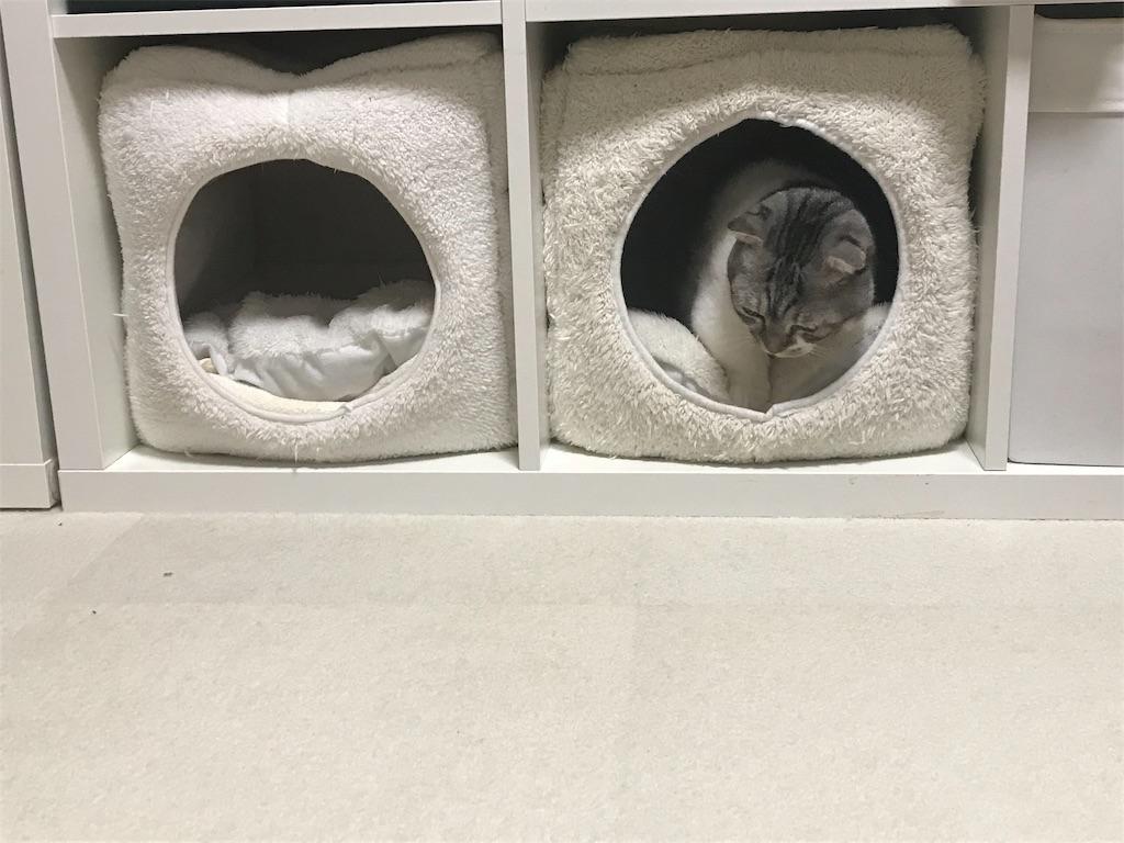 f:id:Gomez-cat:20181212105457j:image