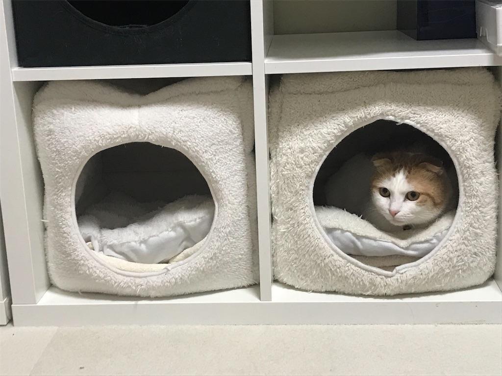f:id:Gomez-cat:20181212105501j:image
