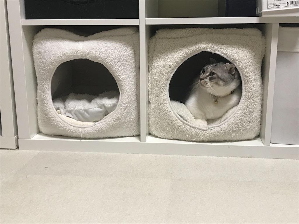 f:id:Gomez-cat:20181212105510j:image