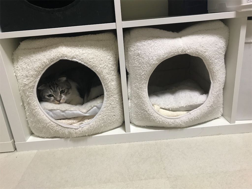 f:id:Gomez-cat:20181212105517j:image