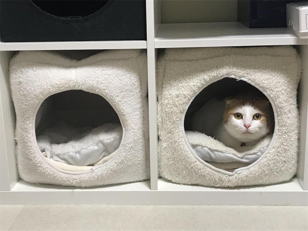 f:id:Gomez-cat:20181212105520j:image