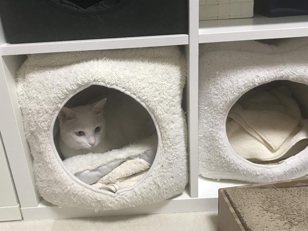 f:id:Gomez-cat:20181212112243j:plain
