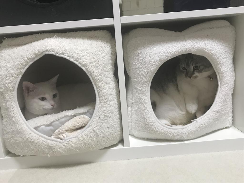 f:id:Gomez-cat:20181212114712j:plain