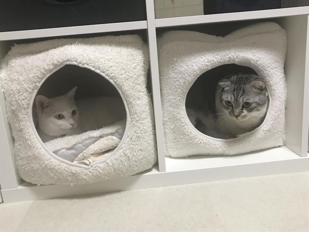 f:id:Gomez-cat:20181212114821j:plain