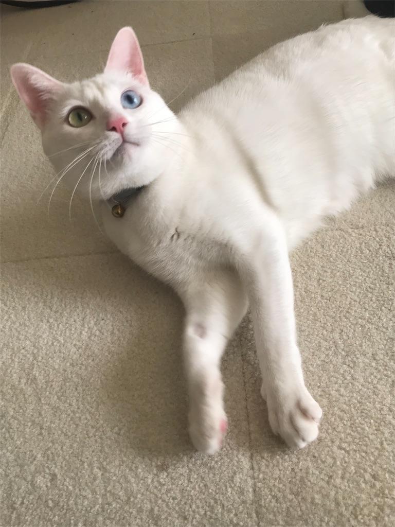 f:id:Gomez-cat:20181221004642j:image