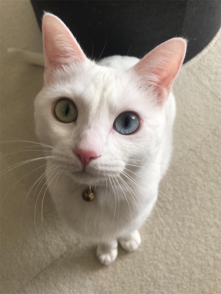 f:id:Gomez-cat:20181221004648j:image