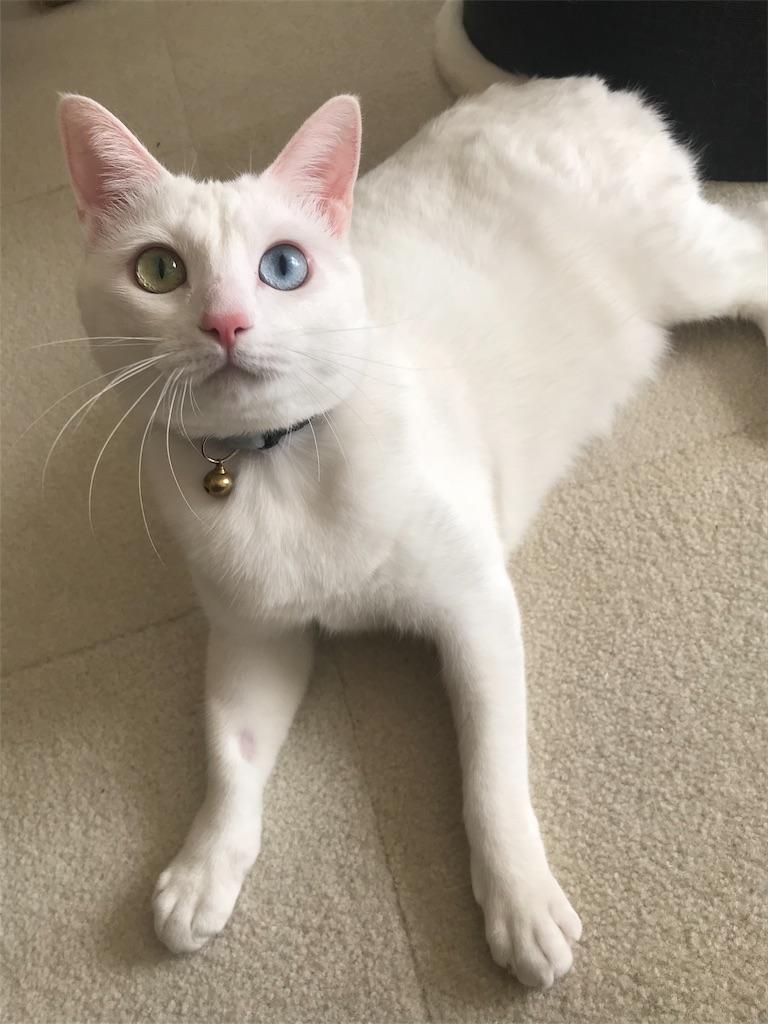 f:id:Gomez-cat:20181221004651j:image
