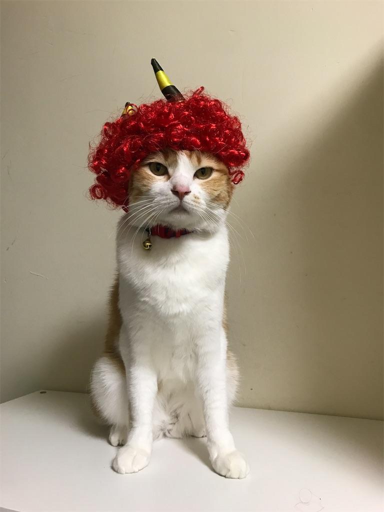 f:id:Gomez-cat:20210203143546j:image