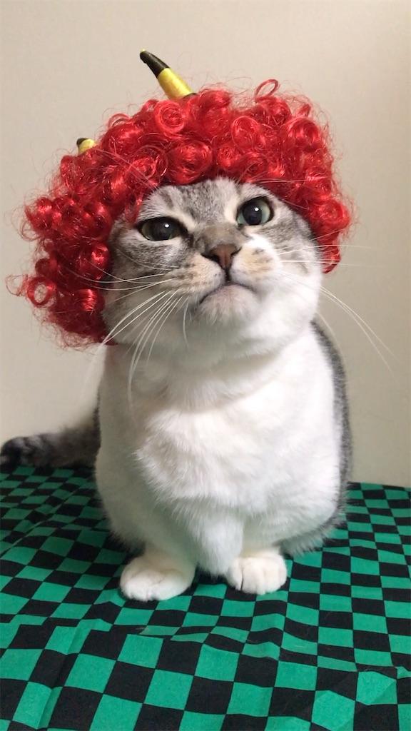 f:id:Gomez-cat:20210203143549j:image