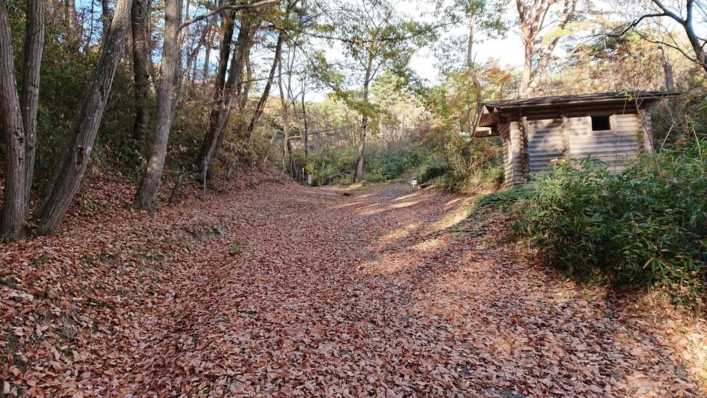 浄土松公園 紅葉