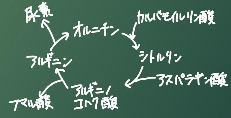 f:id:GoroRin:20210215181852j:image