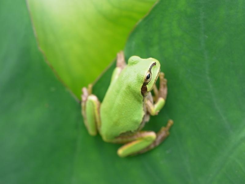 f:id:Greenweekends:20120916113554j:image:w640