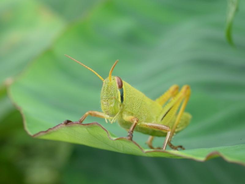 f:id:Greenweekends:20120916113711j:image:w640