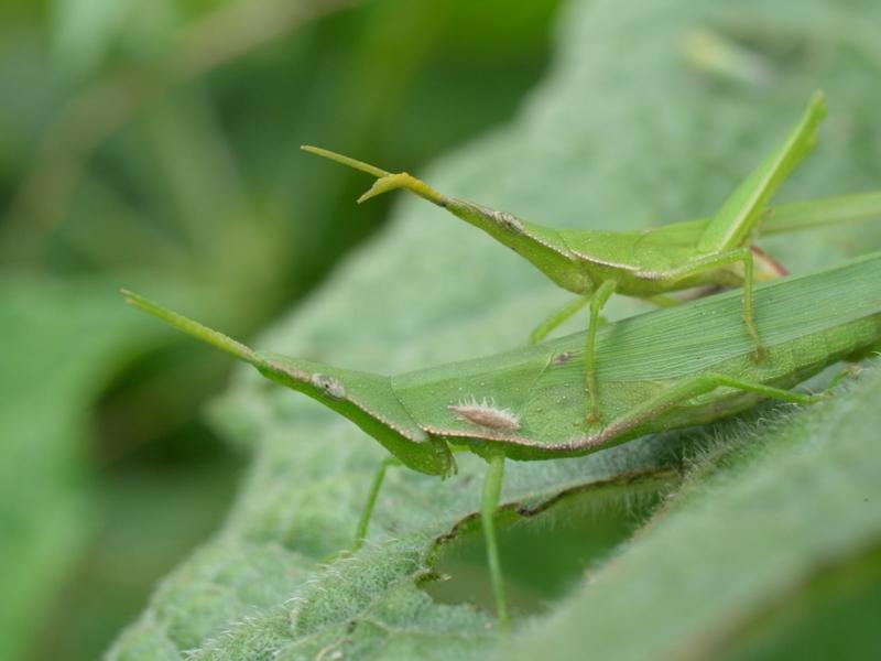 f:id:Greenweekends:20120916114122j:image:w640
