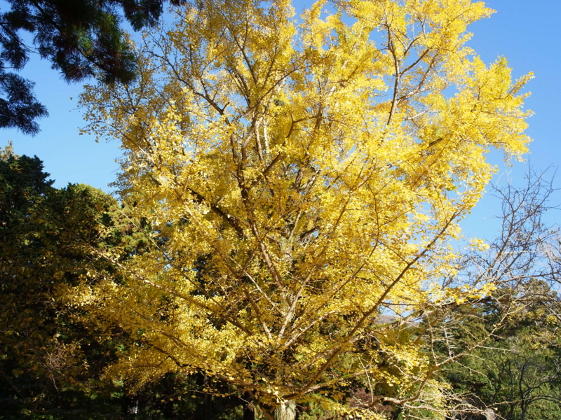 f:id:Greenweekends:20121118075128j:image:w640