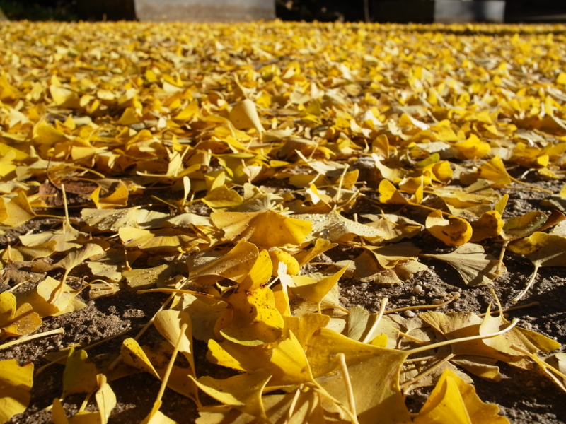 f:id:Greenweekends:20121118075310j:image:w640